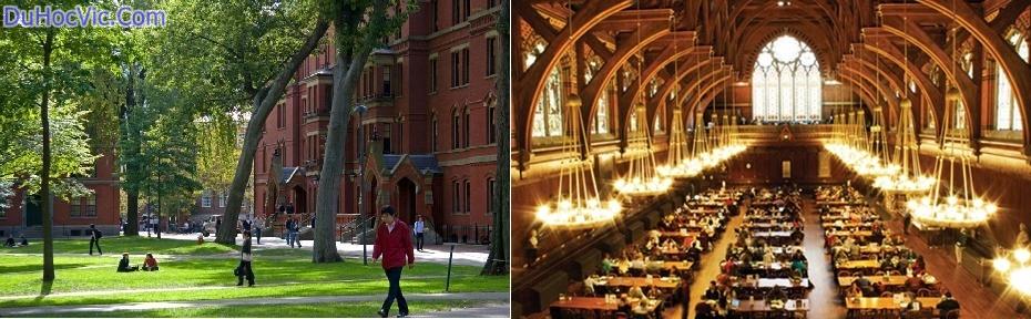 Harvard-khuon-vien-horz