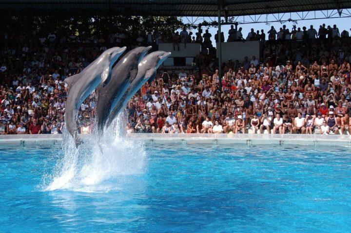 công viên cá heo Zoomarine ở Algarve